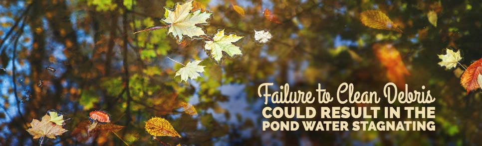 Top Pond Maintenance Issues – Part 2