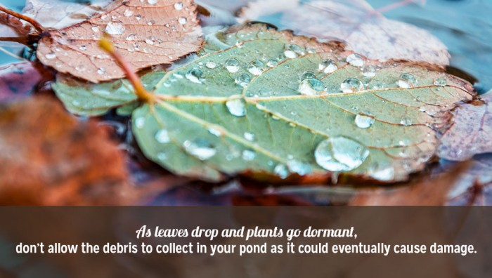 Three Tips for Winterizing Your Pond